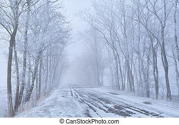 árvore, filas, e, campo, estrada, em, geada