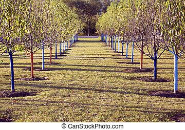 árvore, filas, parque