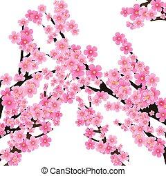árvore, flores, ilustração, brunch, vetorial, flor cereja, sakura, fundo, primavera