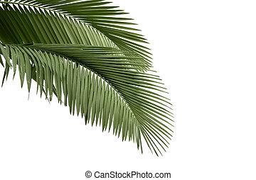 árvore, folhas, palma