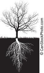 árvore, folhas, raizes, cereja, sem