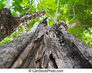 árvore grande