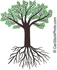 árvore grande, com, verde sai