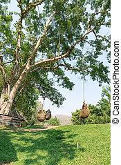 árvore grande, e, grama verde, parque
