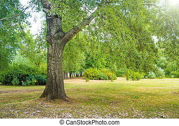 árvore grande, em, a, parque verde