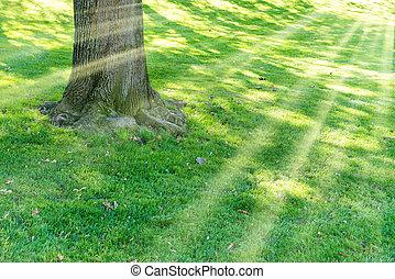 árvore grande, em, parque verde