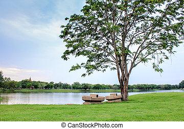 árvore grande, ligado, grama verde, parque