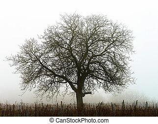 árvore, grande, nevoeiro, silueta, inverno