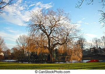 árvore grande, parque