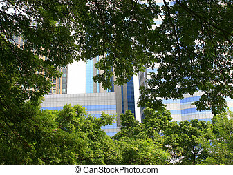 árvore grande, parque, e, cidade