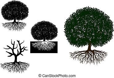 árvore grande, raizes
