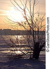 árvore, Inverno, costa