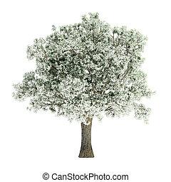 árvore inverno