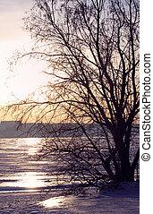 árvore, Inverno