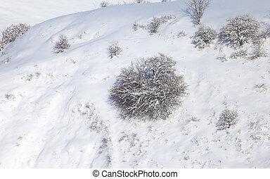 árvore, Inverno, natureza