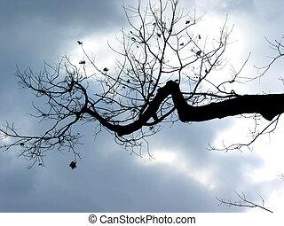 árvore inverno, ramo