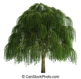 árvore, isolado, branco