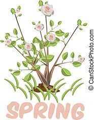 árvore, isolado, florescer