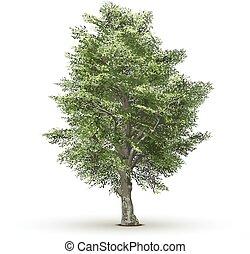 árvore, isolado, fundo, vetorial, verde, branca