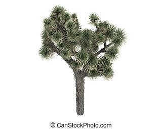 árvore joshua, yucca, ou, brevifolia