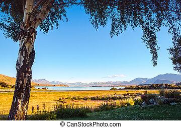 árvore, lago, formulou, tekapo, amanhecer, paisagem, vista