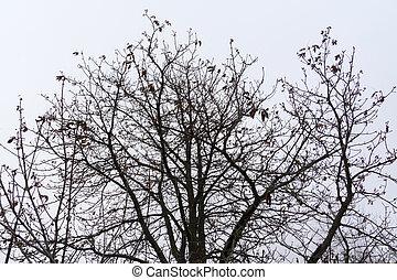 árvore, leafless, ramos