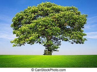 árvore, ligado, céu azul