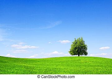 árvore, ligado, campo verde