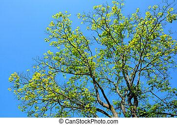 árvore, ligado, experiência azul