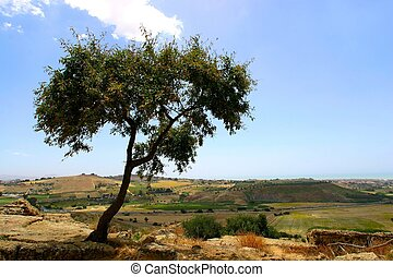 árvore, ligado, topo colina
