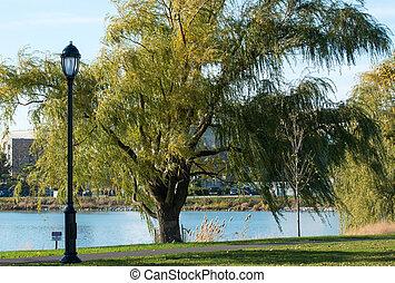 árvore, ligado, um, lago