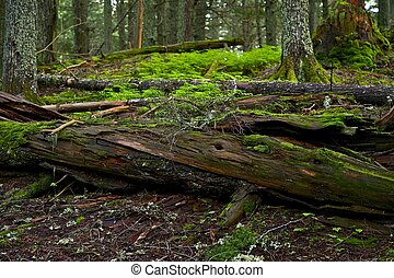 árvore, log, morto