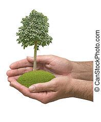 árvore, mãos