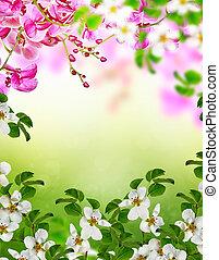 árvore, maçã, florescer