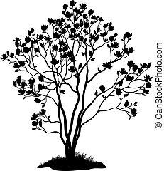 árvore, magnólia, capim, silueta, flores