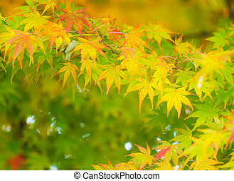 árvore, maple