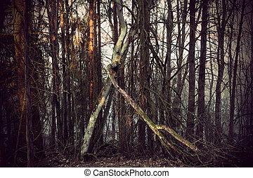 árvore morta, com, fungo