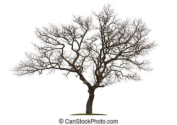 árvore morta, isolado, e, branca, backgr
