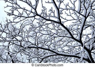 árvore, nevado