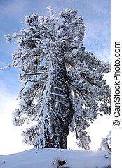 árvore, neve, carregado