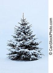 árvore, neve, pinho
