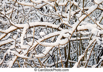 árvore, neve, ramo