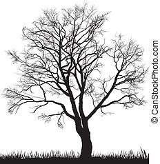 árvore noz, em, inverno
