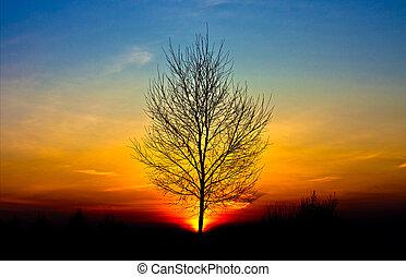 árvore, pôr do sol