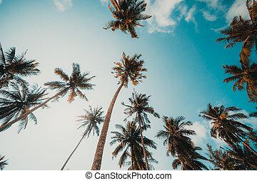 árvore palma coco