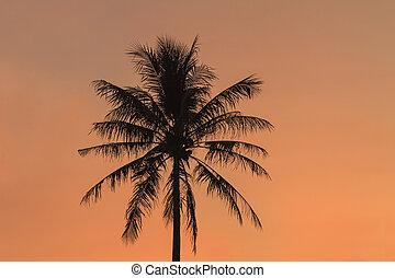 árvore palma coco, em, pôr do sol, luz