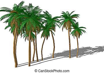 árvore palma, e, shadow.