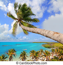 árvore palma, em, tropicais, perfeitos, praia