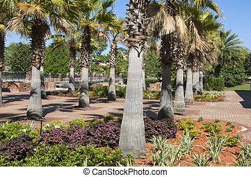 árvore palma, filas
