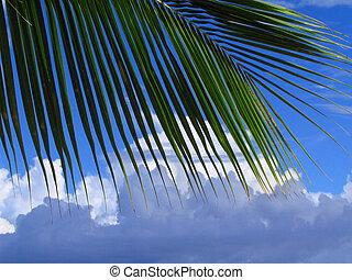 árvore palma, folha, e, cloudscape